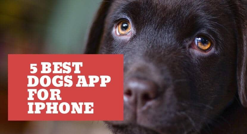 Best Dog Apps